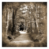 Vermont Mountain Trail 3 Posters by Suzanne Foschino