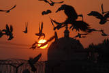 Birds Fly During the Last Sunset of Year in Multan Photographic Print by Mk Chaudhry