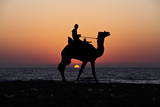 Palestinian Man Rides a Camel Along the Beach During Sunset in the West of Gaza City Photographic Print by Ali Ali