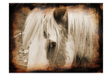 Sepia Horse Posters by Suzanne Foschino