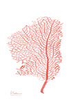 Sea Fan 5 Posters by Albert Koetsier