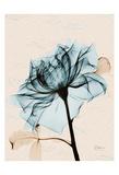 Teal Rose 2 Posters by Albert Koetsier