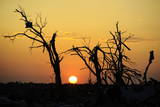 The Sun Comes Up Behind Damaged Trees after a Large Tornado Hit the Town of Joplin Photographic Print by Larry W. Smith