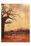Tony Pazan - Baobab Life 1 Reprodukce
