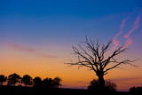A Dead Old Tree in a Field Is Backdropped by the Sunset Glow Near Muencheberg Photographic Print by Patrick Peul