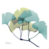 Gingko Prints by Albert Koetsier
