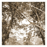 Sepia Trees Prints by Suzanne Foschino