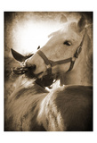 Horse's Kiss Sepia 1 Poster by Suzanne Foschino