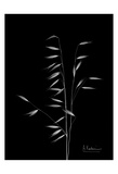 Wild Grass 8 Prints by Albert Koetsier
