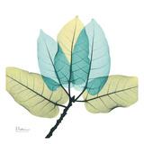 Ficus Burkey Posters av Albert Koetsier