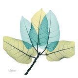 Ficus Burkey Poster von Albert Koetsier