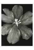 Big Blossom I Prints by Albert Koetsier