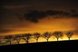 Bare Trees are Seen During Sunrise Near Orferode Photographic Print by Uwe Zucchi