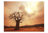 Baobab Life Prints by Tony Pazan
