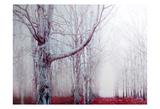 Fairy Tale Mist Prints by Tracey Telik