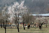 Spring Arrives in Indian Kashmir Photographic Print by Farooq Khan