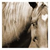 Horse Heart Poster par Suzanne Foschino