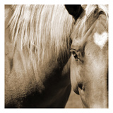 Horse Heart Prints by Suzanne Foschino