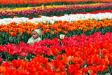 The Child of an Indian Tourist Sits Among Tulip Flowers in Siraj Bagh Tulip Garden in Srinagar Photographic Print by Altaf Qadri