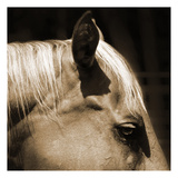 Horse 2 Prints by Suzanne Foschino