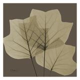 Tulip Tree Prints by Albert Koetsier