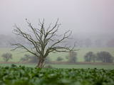 An Old Dead Tree Stands on a Field in the Fog Near Muencheberg, Eastern Germany Photographic Print by Patrick Peul