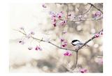 Full Bloom Art by Tracey Telik