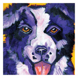 Border Collie Art by Ilene Richard