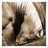 Horse Bow Sepia Prints by Suzanne Foschino