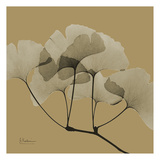 Gingko Poster by Albert Koetsier