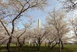 The Washington Monument Photographic Print by Michael Reynolds