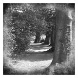 Wicklow Tree Line C Art by Suzanne Foschino