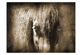 Sepia Black Pony Prints by Suzanne Foschino