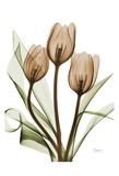 Tulips Print by Albert Koetsier