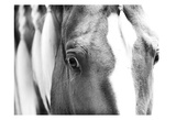 Braided Mane BW Posters by Suzanne Foschino