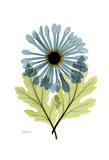Crisantemo - grande Stampe di Albert Koetsier