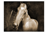 Sepia Heart Horse 2 Prints by Suzanne Foschino