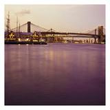 Brooklyn Purple Posters by Tracey Telik