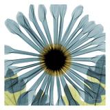Chrysanthemum Affischer av Albert Koetsier