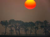 The Red Morning Sun Rises over Trees on a Field in Mallnow Photographic Print by Patrick Peul