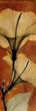 Hibiscus Posters by Albert Koetsier