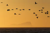 Sunrise in Cape Town Photographic Print by Nic Bothma