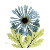 Chrysanthemum C Prints by Albert Koetsier