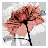 Rose on Gray 2 Prints by Albert Koetsier