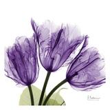 Tulipani  Poster di Albert Koetsier