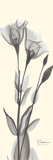Yellow-Gray Gentian Prints by Albert Koetsier