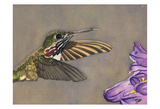 Humming Bird Print by Sara Anderson