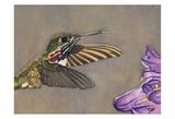 Humming Bird Print by Sara Anderson
