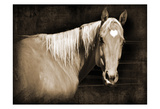 Sepia Heart Horse Posters by Suzanne Foschino