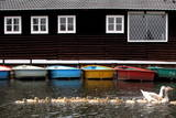 Different Coloured Rowing Boats Photographic Print by Kim Ludbrook
